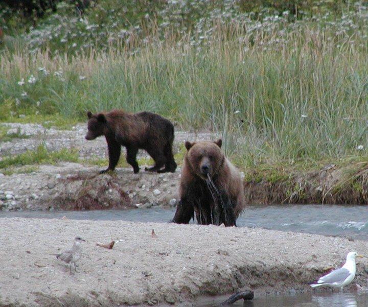 Bear%27s%20gone%20fishin%27