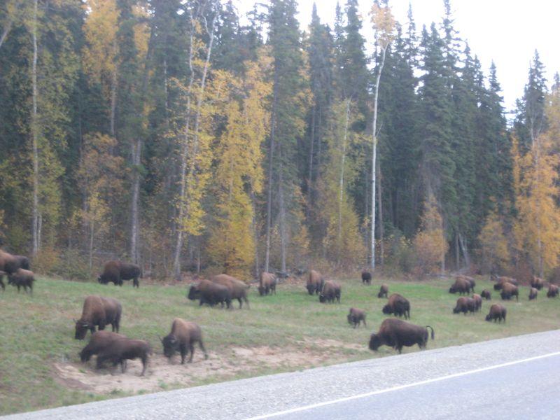 Utah Oct 2009 034