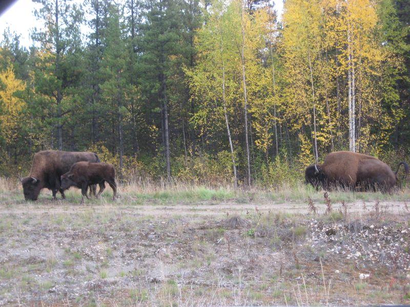 Utah Oct 2009 022