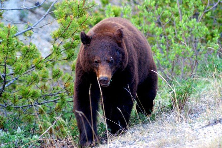 Jared bear2